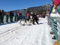 Sechser Hundeschlitten Huskies beschleunigen