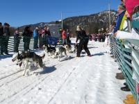 Sechser Hundeschlitten Huskies gewinnen Fahrt