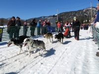 Sechser Hundeschlitten: Huskies ziehen den Hundeschlitten