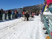 Sechser Hundeschlitten vor dem Start