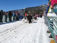 Sechser Hundeschlitten an der Startlinie