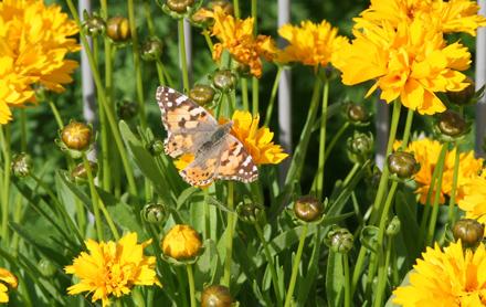 Schmetterling Bild von oben augenommen